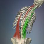 lateral-flexion-exercise-150x150